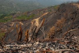 Bosque de Adjuntas  (Ricardo Alcaraz/ Diálogo)
