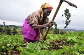 En Ginebra, los grupos que promueven la justicia climática recordaron a los negociadores que la mayor amenaza a la seguridad alimentaria sigue siendo la falta del esfuerzo necesario para reducir drásticamente las emisiones de carbono antes del año 2020. (Suministrada)