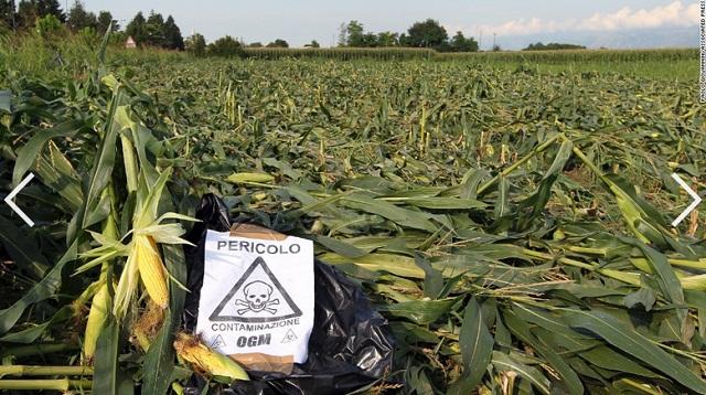 Se-avecina-un-desastre-alimentario-Informe-sobre-agrotoxicos-y-transgenicos
