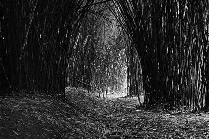 Jardín Botánico, 1976. (Ricardo Alcaraz / Diálogo)
