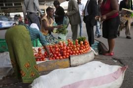 Según el Programa Mundial de Alimentos, unas 2.2 millones de personas sufren la escasez de alimentos en el país. (Jeffrey Moyo / IPS)