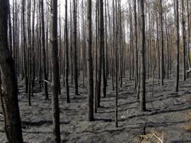 El incendio que arrasó con los bosques en la región de la Patagonia Argentina devastó áreas destinadas a la ganadería y el ecoturismo, y se cree que podrá afectar la calidad del aire por meses o años. (Suministrada)