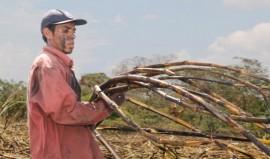 """El cortador de caña Evaristo Pérez, de 22 años, en la finca La Isla, en el occidental municipio de San Juan Opico, en El Salvador. Él fue uno de los niños temporeros en los cañaverales, de donde casi desaparecieron gracias a un compromiso de """"cero tolerancia"""" al trabajo infantil en la agroindustria azucarera."""