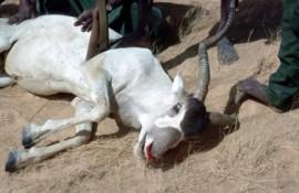 Delitos contra la vida silvestre