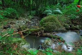 Bosque Carite/noviembre 2007
