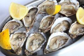 Las ostras son parte de los moluscos.