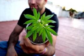 ¿Por qué debe ser legalizada la marihuana en Puerto Rico? Gabriel Jiménez Barrón, autor de este texto, señala algunas de las razones. (www.flickr.com/creativecommons)