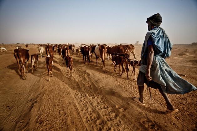 Dja Abdullah, una víctima más del cambio climático impulsado por las centrales eléctricas de carbón, caminó durante 300 kilómetros con su ganado en busca de pastos frescos en la región del Sahel, en Mauritania. Crédito: Pablo Tosco/Oxfam
