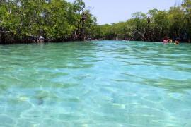 """""""Isla Guilligan"""" es una de las tres islitas que conforman los Cayos de Caña Gorda, 18 kilómetros cuadrados cubiertos de manglares a una milla de la costa de Guánica. (David Cordero Mercado / Diálogo)"""