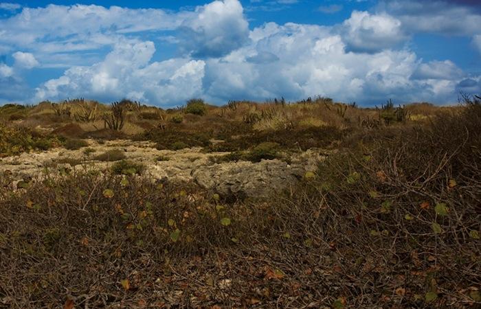 En el Bosque Seco se estudiarán datos climatológicos a largo plazo, atmósfera, suelos y taxones de fauna y flora. (Suministrada)