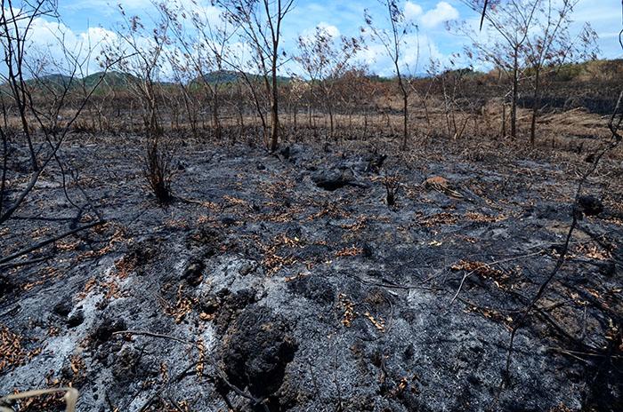 Casi un 50 por ciento de la totalidad del terreno de la Estación Experimental Agrícola de la UPR en Gurabo, fue consumido hace casi dos semanas en el incendio forestal más grande registrado en la Isla. (Ricardo Alcaraz / Diálogo)