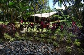 En el Jardín Botánico de la UPR, el efecto de la sequía se ha registrado, más bien, en los niveles de pequeños lagos y riachuelos que forman parte de los distintos jardines. (Ricardo Alcaraz / Diálogo)