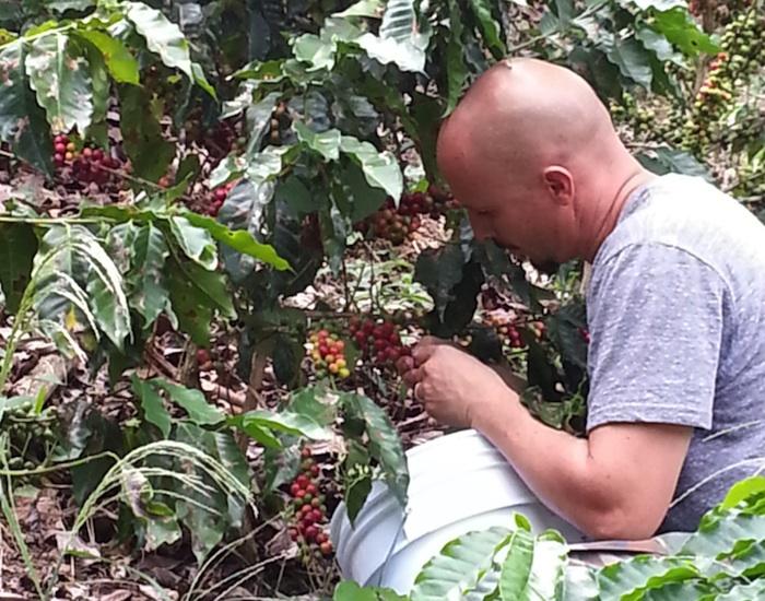 Agricultor Waldemar Brebán en su hacienda, mientras se dedica a la  cosecha de café. (Suministrada)