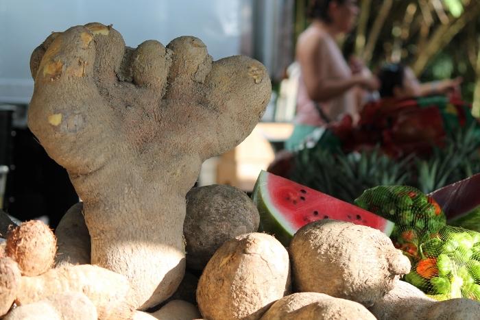 Frutas y verduras de la Finca Aníbal Rivera Fuentes de Corozal. (Michelle Estades/ Diálogo)