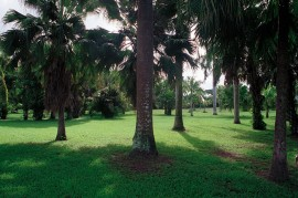 Jardín Botánico. (Ricardo Alcaraz/ Diálogo)