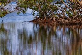 El Caño Tiburones es el humedal estuario más grande de Puerto Rico (Javier Hernández/Suministrada)