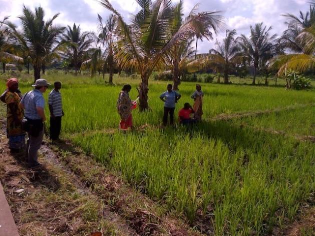 Agricultores de Tanzania. Crédito: Kizito Makoye/IPS