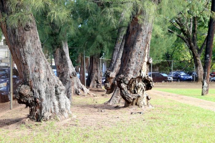 Imagen de los árboles (suministrada)