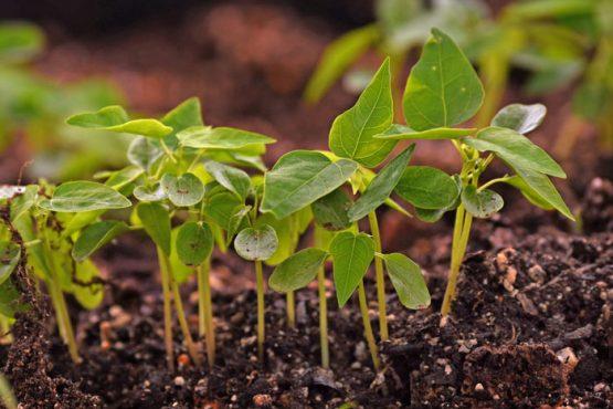 La producción de alimentos en nuestras tierras fértiles es un asunto de seguridad nacional. (Ricardo Alcaraz / Diálogo)
