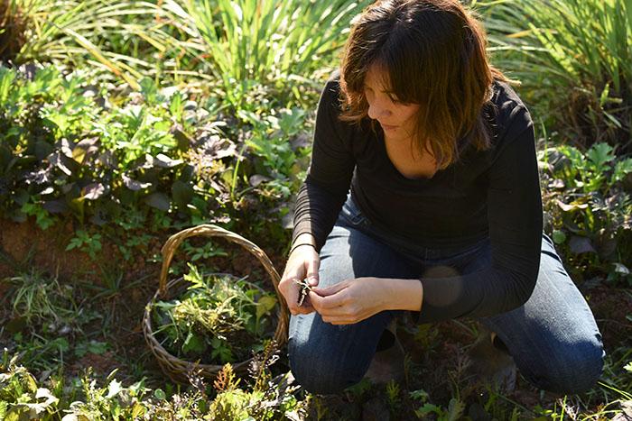 Giomara La-Quay cosechando lechuga. (Ricardo Alcaraz / Diálogo)
