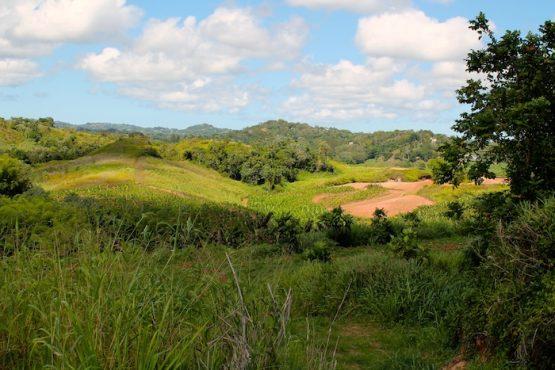Hacienda Gosén en Moca. (Michelle Estades/ Diálogo)