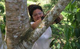 Estudiantes trabajando con árboles UPR Utuado.