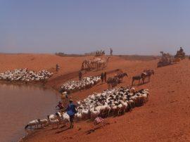 Pastores de Etiopía deben trasladarse constantemente en busca de pasturas y pozos de agua para sus animales. Crédito: William Lloyd-George/IPS