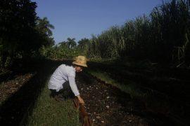 Iraida Semino, de 40 años, prepara un cantero para sembrar, en su finca La Maravilla, en el municipio La Lisa, en la periferia de La Habana, en Cuba. Con su labor como agricultora sostiene una familia de cinco personas. Crédito: Jorge Luis Baños/IPS