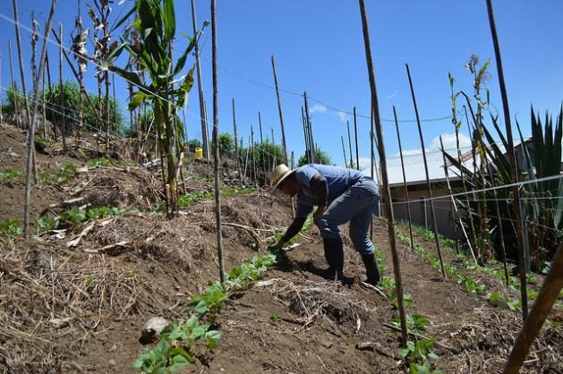 Agricultores centroamericanos han creado una nueva forma de enfrentar desastres. (IPS)