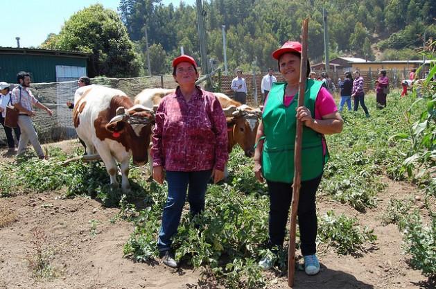 Dos productoras agropecuarias, en la localidad de Cobquecura, en el centro de Chile, muestran a visitantes cambios en sus siembras de subsistencia para enfrentar el incremento de la temperatura en el planeta, con el apoyo de políticas públicas a favor de la seguridad alimentaria en tiempos de cambio climático. Crédito: Claudio Riquelme/IPS