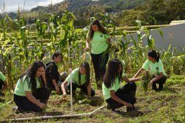 en-escuela-vocacional-de-agricultura-en-corozal