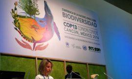 Podio de la plenaria de la Conferencia de las Naciones Unidas sobre Biodiversidad, que se celebra en Cancún, en México. Crédito: Ana Cristina Ramos/Pie de Página