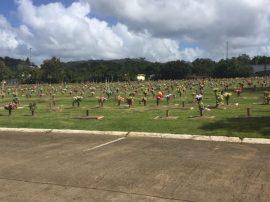 Cementerio Borinquen Memorial, Caguas.