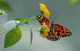 mariposa-casa-ecologica
