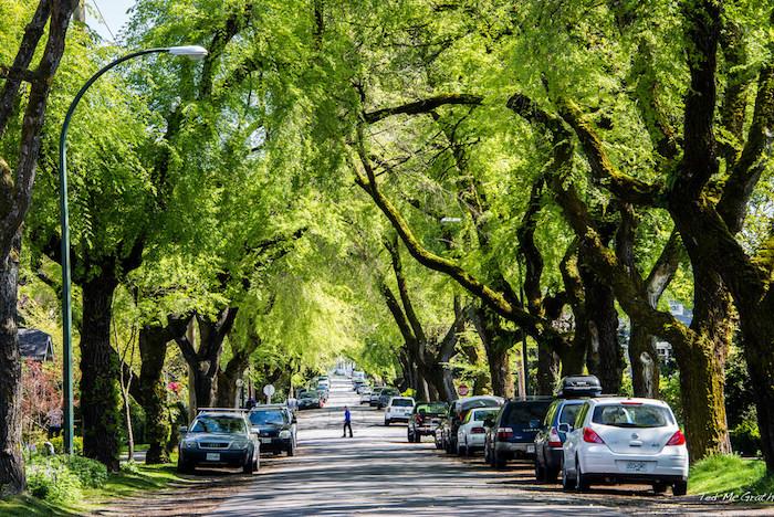 Los árboles urbanos pueden ayudar a mitigar algunos de los impactos negativos y las consecuencias sociales de la urbanización. (Ted McGrath / Visualhunt. CC-BY-NC-SA)
