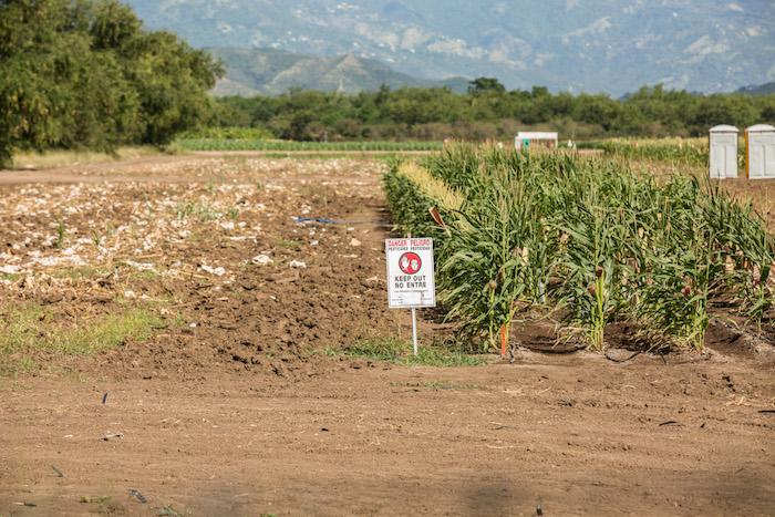 Finca Amelia de la Autoridad de Tierras alquilada por Monsanto en Juana Díaz.