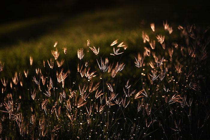 Flores. (Ricardo Alcaraz/ Diálogo)