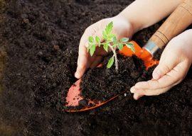 cultivos, siembre, agricultura
