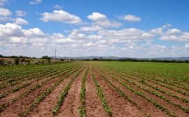 cultivo, siembre, agricultura, tierra,