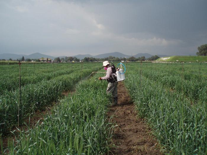 herbicida CIMMYT via Visual hunt