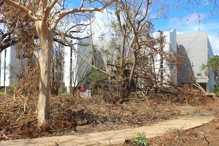 Las áreas verdes del campus fueron gravemente laceradas.  (Víctor Rodríguez-Velázquez/Diálogo)