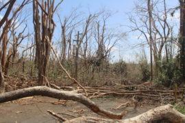 Vista del impacto del huracán María sobre el Jardín Botánico Sur. (Víctor Rodríguez / Diálogo)