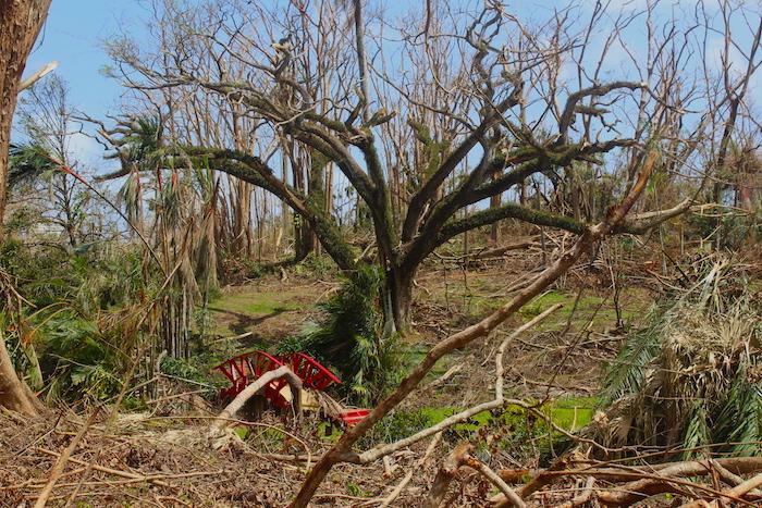 Vista del impacto del huracán María sobre el Jardín Botánico Sur (Víctor Rodríguez/Diálogo)