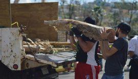 Voluntarios y empleados en el recogido de escombros en el Jardín Botánico. (Andrés Santana Miranda/Diálogo)