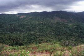 Bosque del Pueblo de Adjuntas