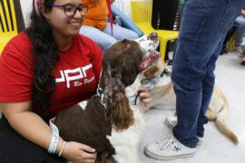 Estudiantes de la Iupi liberan stess con cans de terapia 5