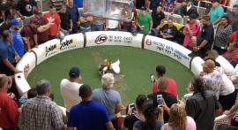 repo gallos suministrada PM