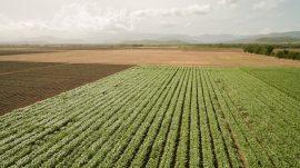agricultura CPI