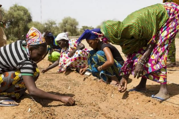 mujeres africanas ips. jpg