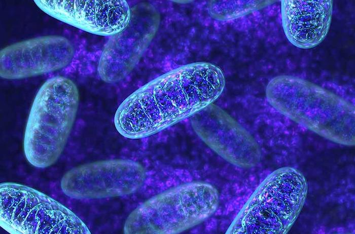 mitocondrias medlineplus.gov